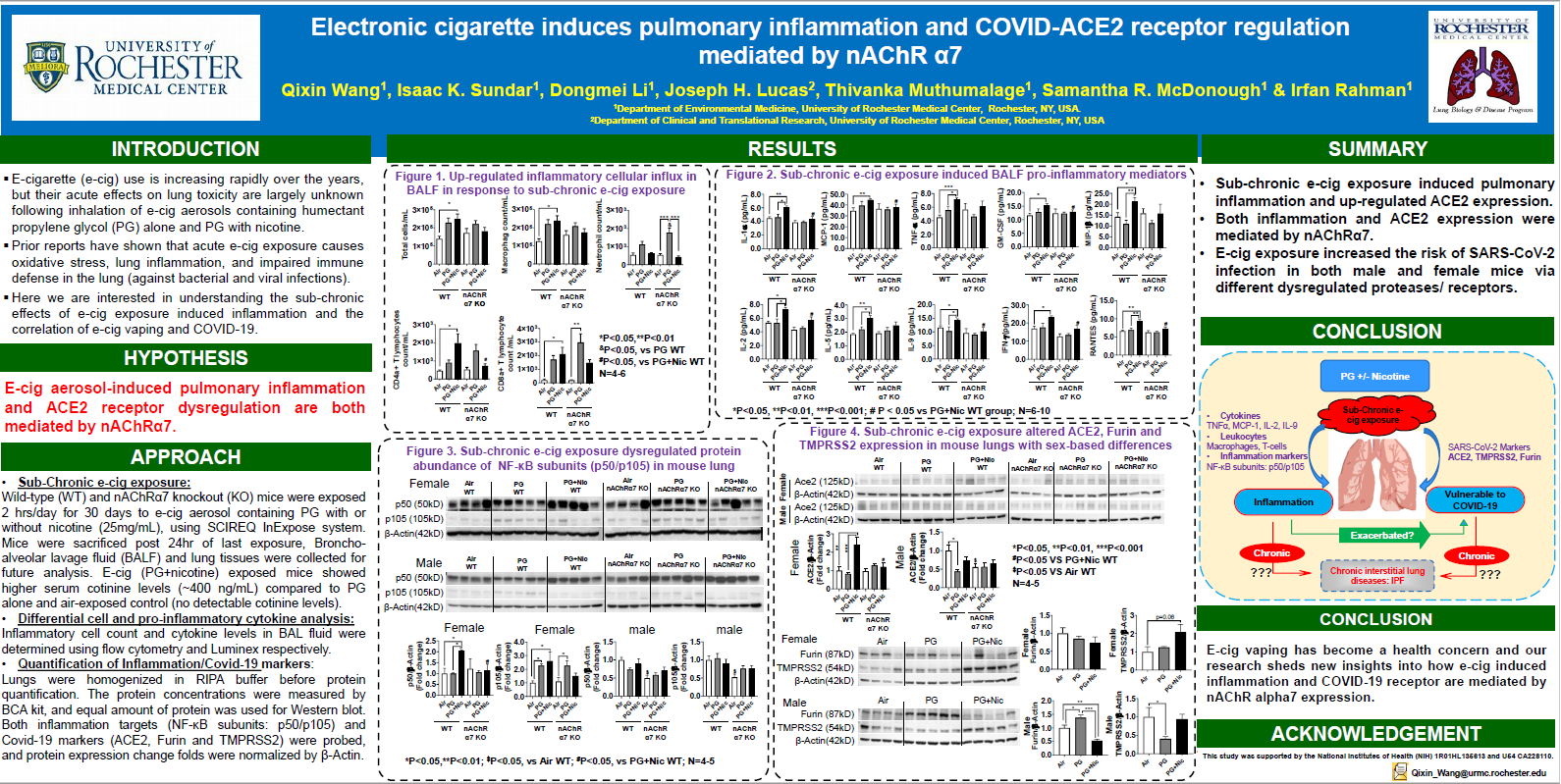 Electronic cigarette induces pulmonary inflammation and COVID-ACE2 receptor regulation mediated by nAChR α7
